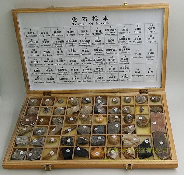 56种化石标本